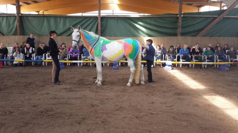 Kurs Anatomie Pferd